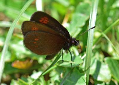 SchmetterlingSchwarz-1707-01